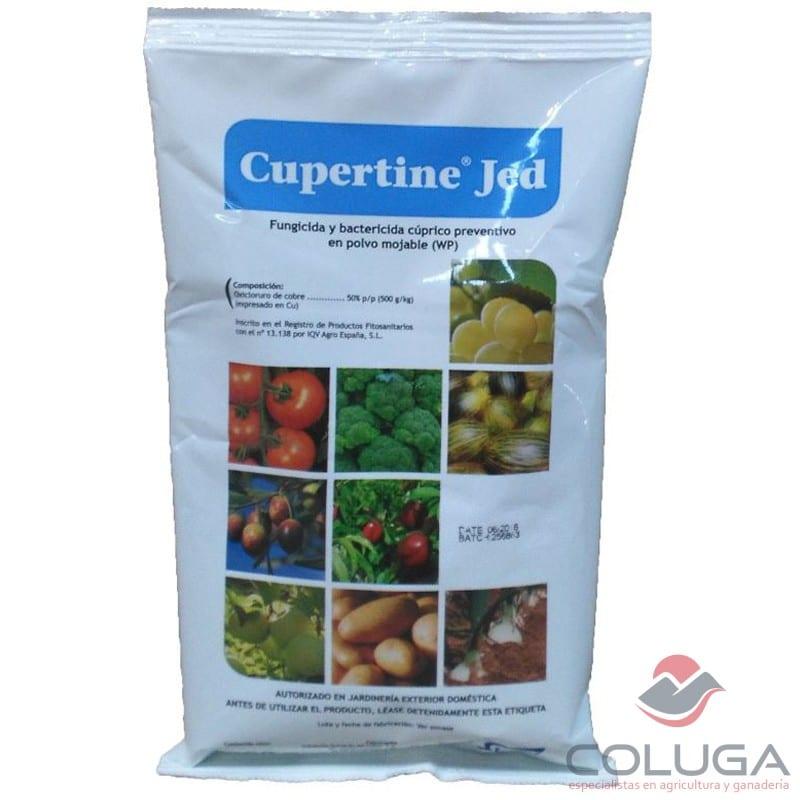 cupertine jed